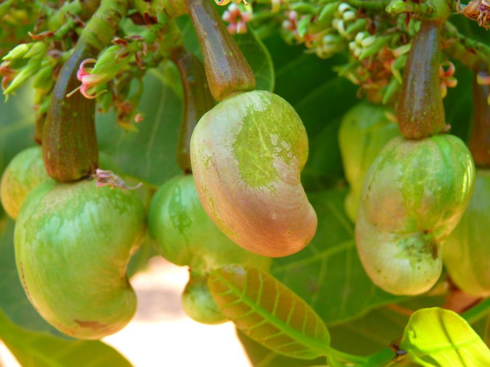 cashew-51978_960_720